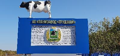 http://saratovagro.ru/wp-content/uploads/2020/09/Trudoovoj-Korova.jpg